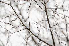 USA, New York State, Brooklyn, Williamsburg, snow on tree branches - stock photo