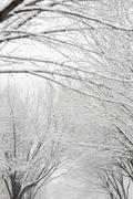 USA, New York State, Brooklyn, Williamsburg, snow on tree branches Stock Photos