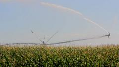 Maize irrigation - stock footage