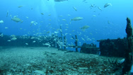 Stock Video Footage of Shipwreck, Mexican Caribbean.