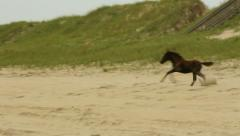 Wild young colt galloping beach people children watch Stock Footage