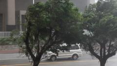 Trees Thrash In Powerful Wind As Major Hurricane Makes Landfall Stock Footage