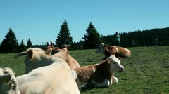 Woman running among cows Stock Footage