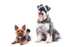 loyal family dogs - stock photo