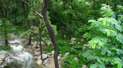 Mountain creek stream from forests & shrubs. Stock Footage