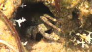 Stock Video Footage of Crab sits in a hole in the stone beach