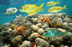 Starfish and tropical fish in a coral reef Stock Photos