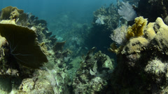 Coral reef Caribbean Stock Footage