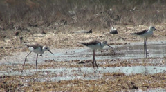 Small Heron gather food in the swamp Stock Footage
