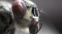 Head horsefly macro Stock Footage