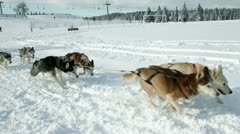 Huskies enjoying while pulling sledge in winter time - stock footage