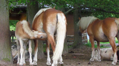 Little baby horse and mother horse Stock Footage