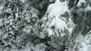 Snow falling from spruce Stock Footage