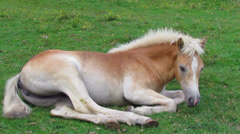 Little baby horse Stock Footage