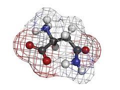 asparagine (asn, n) amino acid, molecular model. - stock illustration