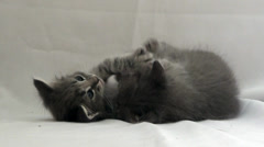 Kitten, a close up Stock Footage