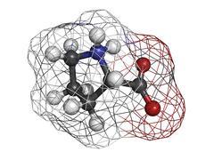 proline (pro, p) amino acid, molecular model. - stock illustration