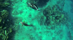 Two beautiful fishes swimming around in to deep blue sea Stock Footage