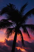 Aruba, silhouette of palm tree at sunset Stock Photos