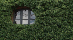 Window in ivy Stock Footage
