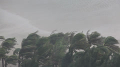 Extreme Hurricane Winds Lash Palm Trees - stock footage