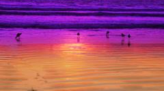 Birds on the beach #2 Stock Footage