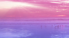Red & purple beach sunset #2 Stock Footage