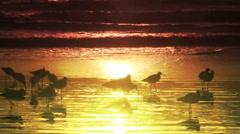 Birds on the beach #5 Stock Footage