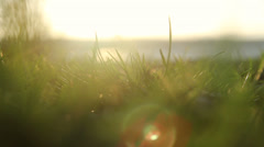 Grass and strong wind Stock Footage
