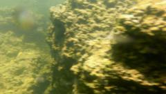 Mono Lake Canoeing 09 Underwater Tufa Bubbles Navy Beach Brine shrimp Stock Footage