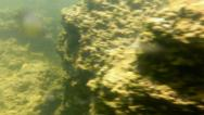 Stock Video Footage of Mono Lake Canoeing 09 Underwater Tufa Bubbles Navy Beach Brine shrimp