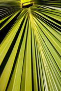 abstract palm frond leaf texture - stock photo