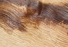 abstract palm frond wood texture - stock photo