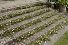 Steps in english country garden Stock Photos