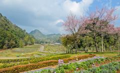 Beautiful garden scence Stock Photos