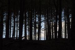 Dark forest. - stock photo