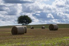 Several stacks of hay in the field. - stock photo