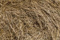 Close-up on a hay. - stock photo