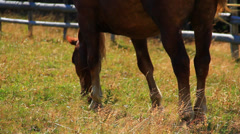 Grazing grass Stock Footage