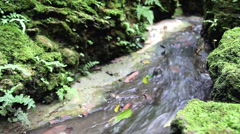 Closeup to small waterfall in the deep forest Stock Footage