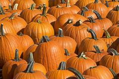 Stock Photo of Pumpkins