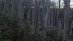 Trees. Dead Forest 2 Stock Footage