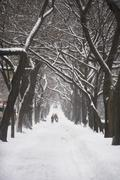 Tree lined path covered in snow - stock photo