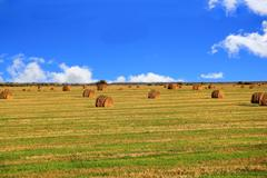 hay, field and blu sky - stock photo