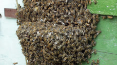 Bees bearding at hive entrance, agriculture beekeeping Stock Footage
