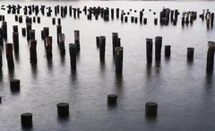 USA, New York City, old pier poles in sea Stock Photos