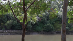 Australian trees and river Stock Footage