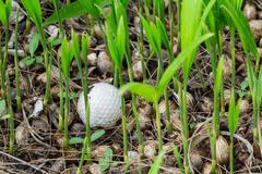 golf ball stuck in palm seedlings - stock photo