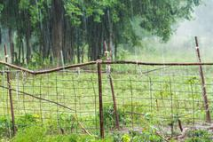 Raining in farm Stock Photos