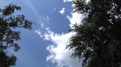 Time lapse, Clouds form then dissipate under blue sky, two trees, time lapse Stock Footage